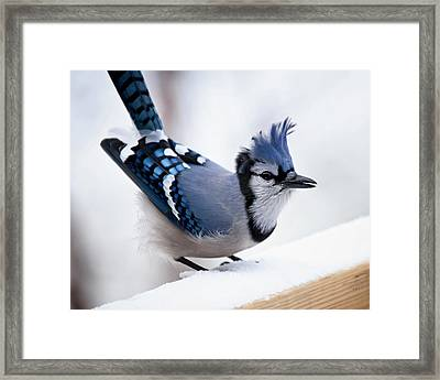 Bad Feather Day Framed Print