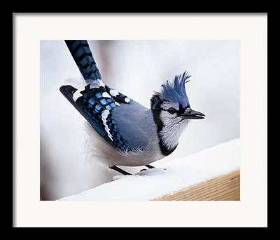 White Birds Framed Prints