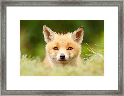 Bad Fur Day - Fox Cub Framed Print