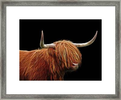 Bad Hair Day - Highland Cow - On Black Framed Print by Gill Billington