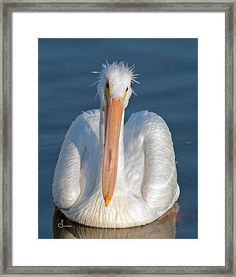 Bad Hair Day Framed Print by Sally Mitchell