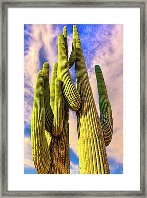 Bad Hombre Framed Print by Paul Wear