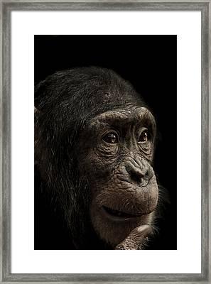 Baffled Framed Print by Paul Neville