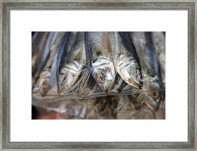 Bag O' Fish 2 Framed Print by Jez C Self