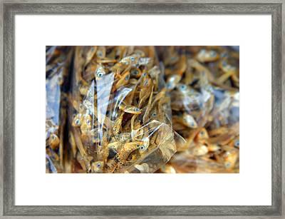 Bag O' Fish Framed Print by Jez C Self