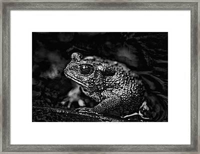 Bah Humbug  American Toad In Black And White Framed Print by Mother Nature