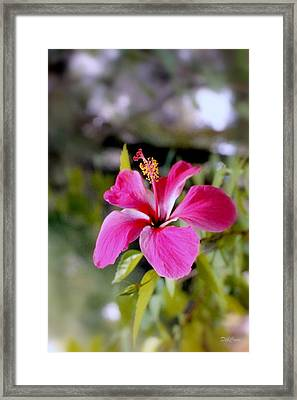 Bahamian Flower Framed Print