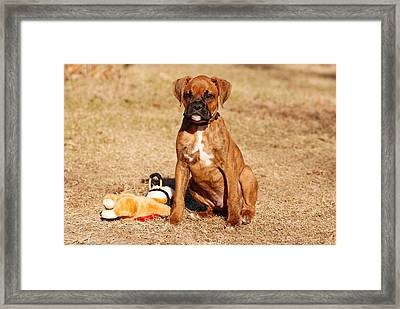 Bailey The Boxer Puppy Framed Print