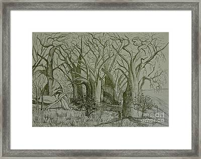 Baines Baobabs Framed Print by Caroline Street