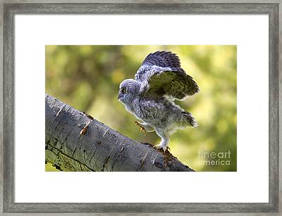 Balance Framed Print by Aaron Whittemore