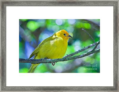 Balance Of Nature Edition 3 Framed Print by Judy Kay