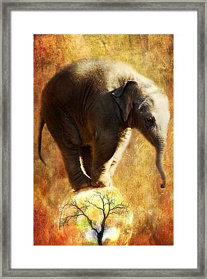 Balance Framed Print by Trudi Simmonds