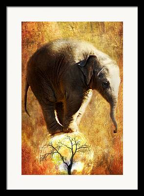 Zoo Digital Art Framed Prints