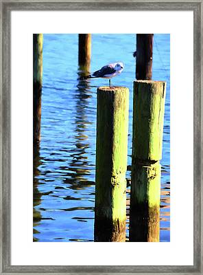 Framed Print featuring the photograph Balanced by Jan Amiss Photography