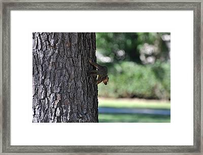 Balancing A Nut Framed Print by Teresa Blanton