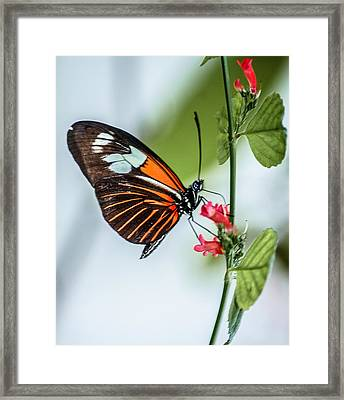 Balancing Act Framed Print by Andrea  OConnell