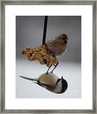 Balancing Act Framed Print by Diane E Berry
