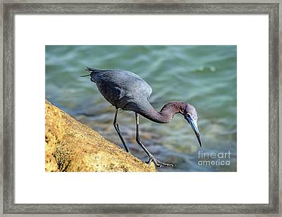 Balancing For Breakfast Framed Print