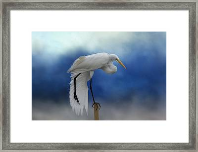 Balancing On One Leg Framed Print by Kim Hojnacki