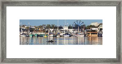 Balboa Dolphin Framed Print by Sean Davey