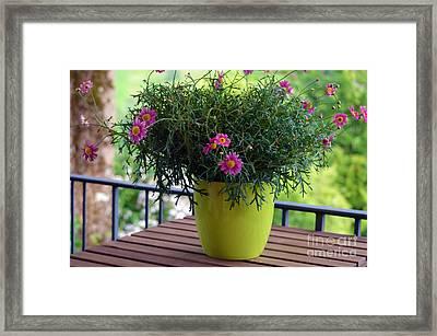 Balcony Flowers Framed Print by Susanne Van Hulst
