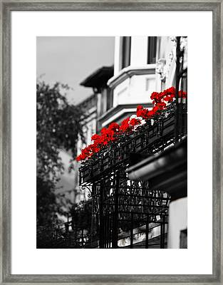 Balcony Roses Framed Print by Edward Myers