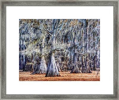 Bald Cypress In Caddo Lake Framed Print by Sumoflam Photography