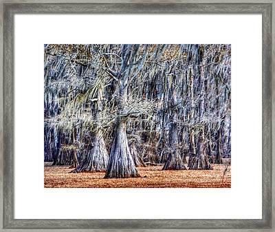 Bald Cypress In Caddo Lake Framed Print