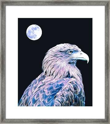 Bald Eagle 3 Framed Print