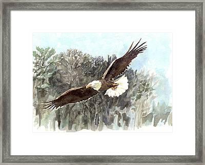 Bald Eagle Framed Print