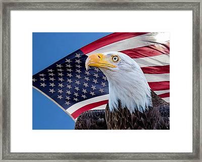 Bald Eagle And American Flag Framed Print
