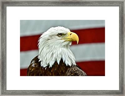 Bald Eagle And Old Glory Framed Print