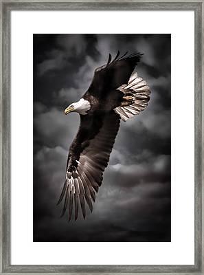 Bald Eagle At Dusk Framed Print