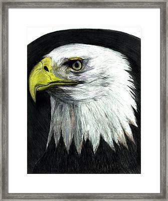 Bald Eagle Framed Print by Bob Schmidt
