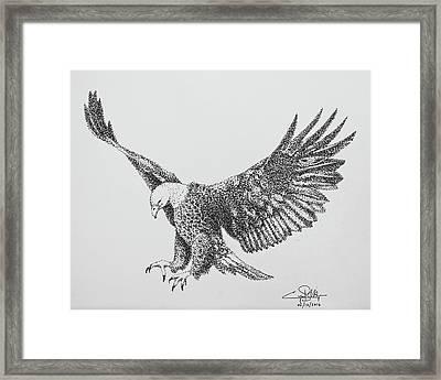 Bald Eagle Framed Print by Cyril Maza