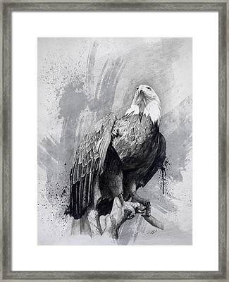 Bald Eagle Drawing Framed Print