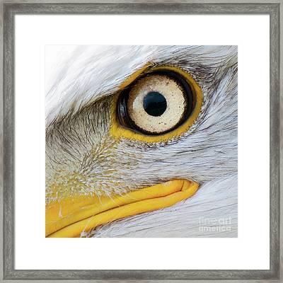 Bald Eagle Eye Framed Print