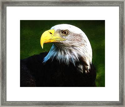 Bald Eagle Face Framed Print by Dan Sproul