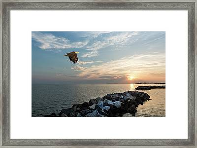 Bald Eagle Flying Over A Jetty At Sunset Framed Print