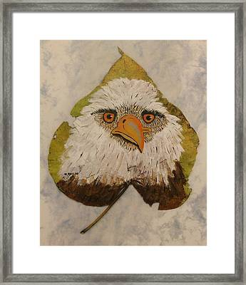 Bald Eagle Front View Framed Print