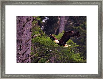 Framed Print featuring the photograph Bald Eagle In Flight - 7 by Christy Pooschke