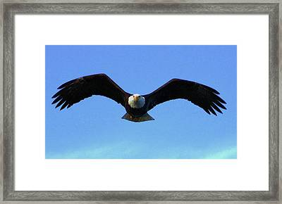 Bald Eagle Intimidation Framed Print by Dean Edwards
