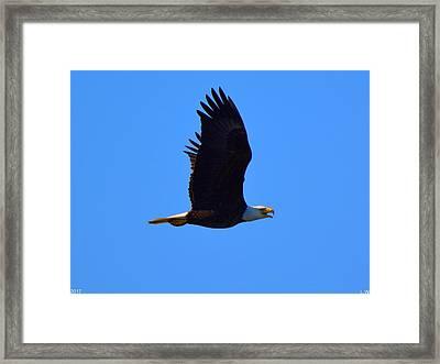 Bald Eagle Framed Print by Lisa Wooten