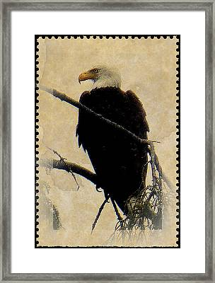 Framed Print featuring the photograph Bald Eagle by Lori Seaman