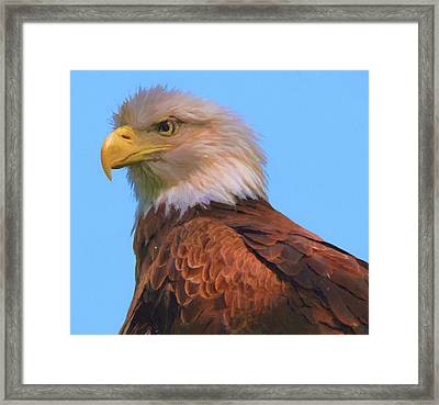 Bald Eagle On Blue Framed Print by Dan Sproul