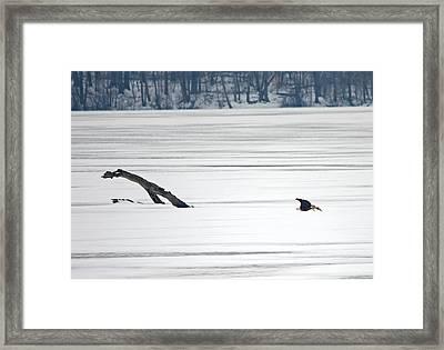 Bald Eagle Over Middle Creek Framed Print