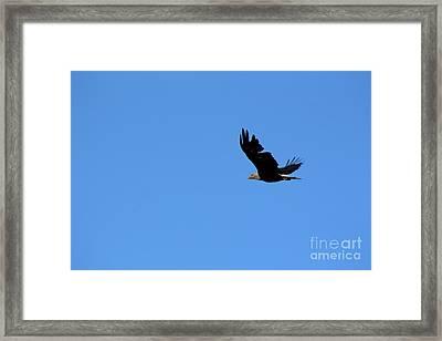 Bald Eagle Over Roseland Lake Framed Print