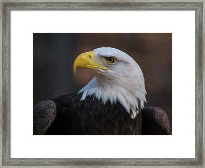 Framed Print featuring the digital art Bald Eagle Painting by Chris Flees