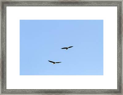 Bald Eagle Pair Framed Print by Michael Russell