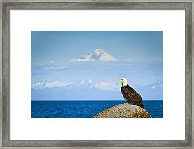 Bald Eagle Perched On A Rock Framed Print